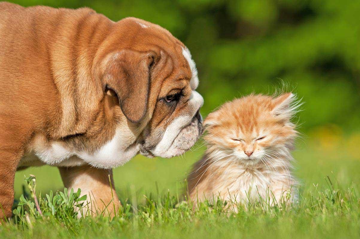 Puppy & Kitten Care Greensboro, NC