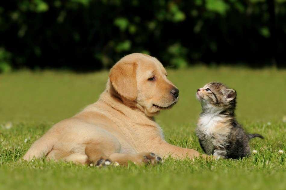 small animal services Greensboro, NC