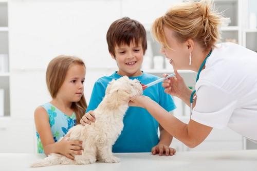 Vaccinations Greensboro, NC